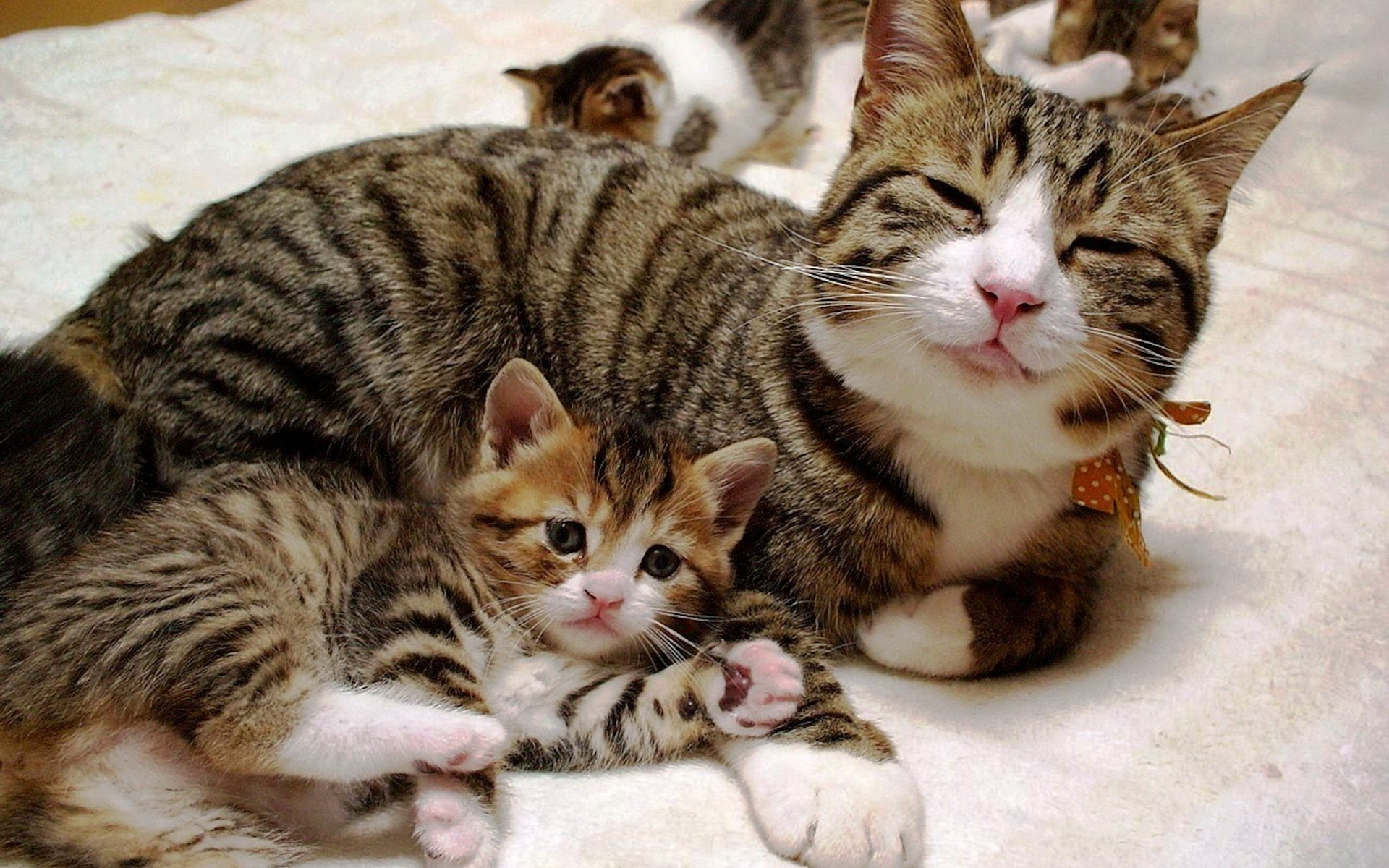 Сонник кошка с котятами маленькие