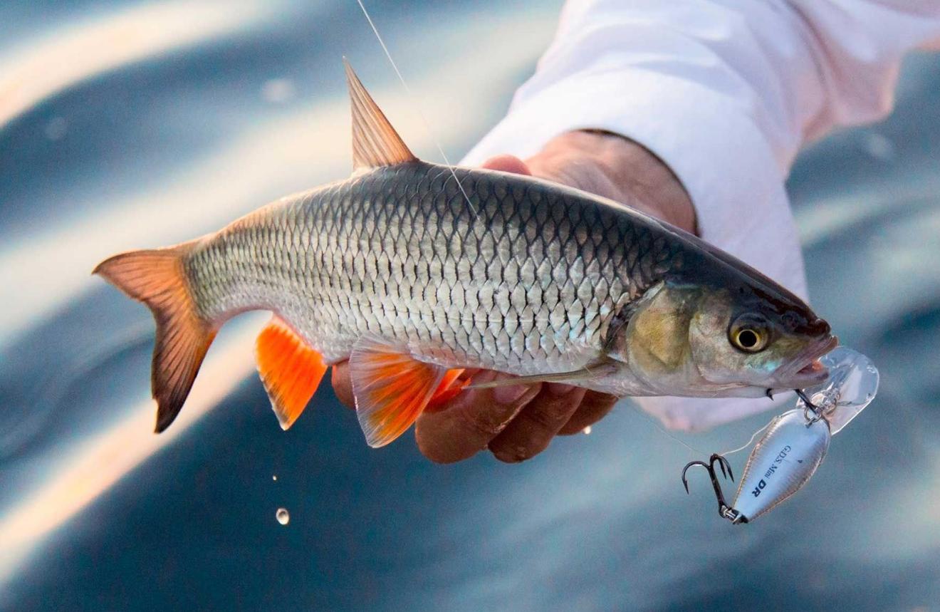 На Селигере вводится запрет на рыбную ловлю