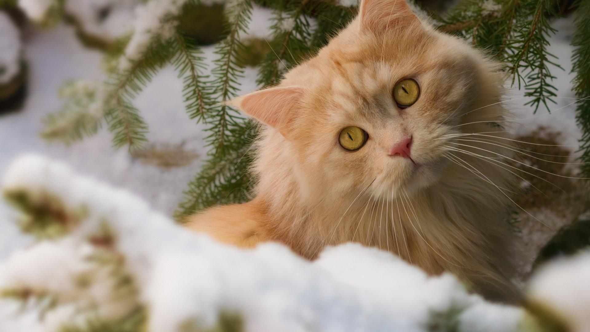 того, что котики зимой фото невозможно представить без