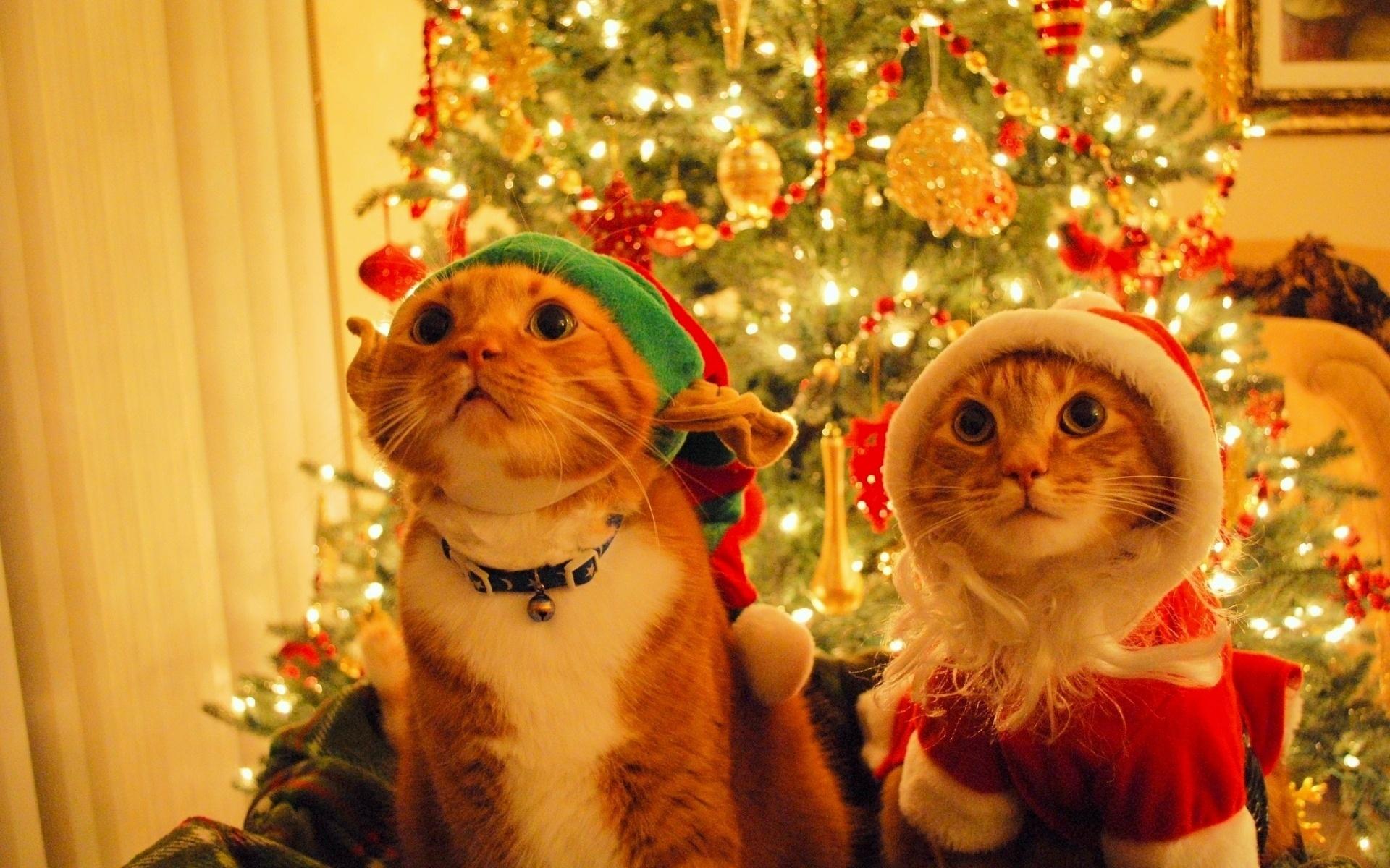 Новогодние чудеса смешные картинки