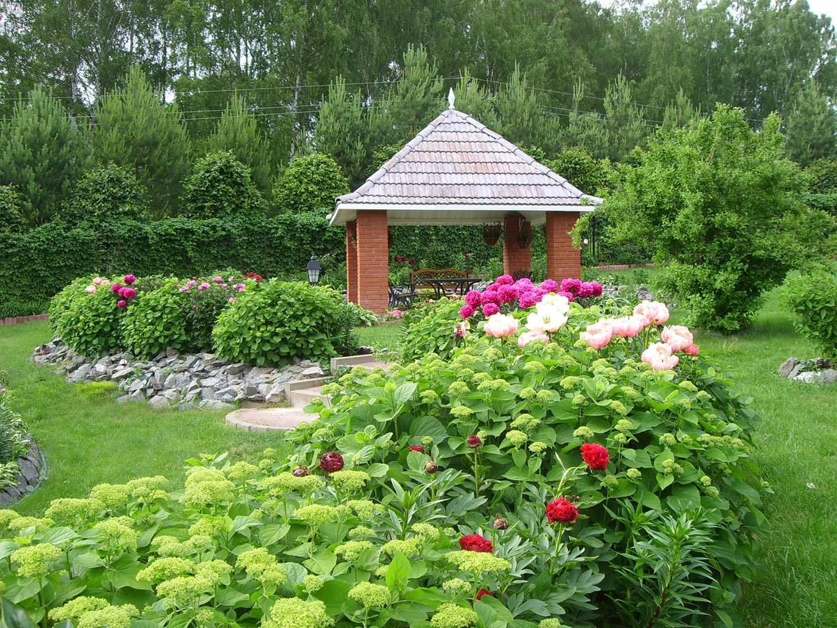 как красиво посадить пионы на участке фото красная представлена