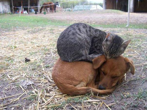 Искусство сна: котики, которые засыпают в самых неожиданных позах и местах