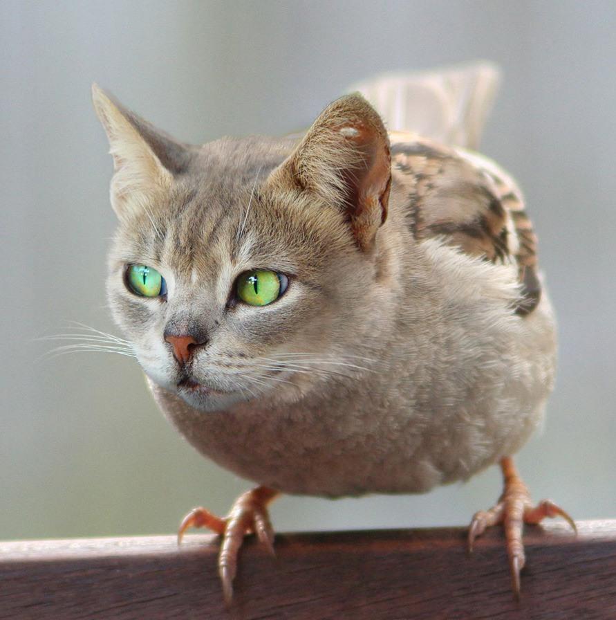 пора прикольные фотожабы животных версий это