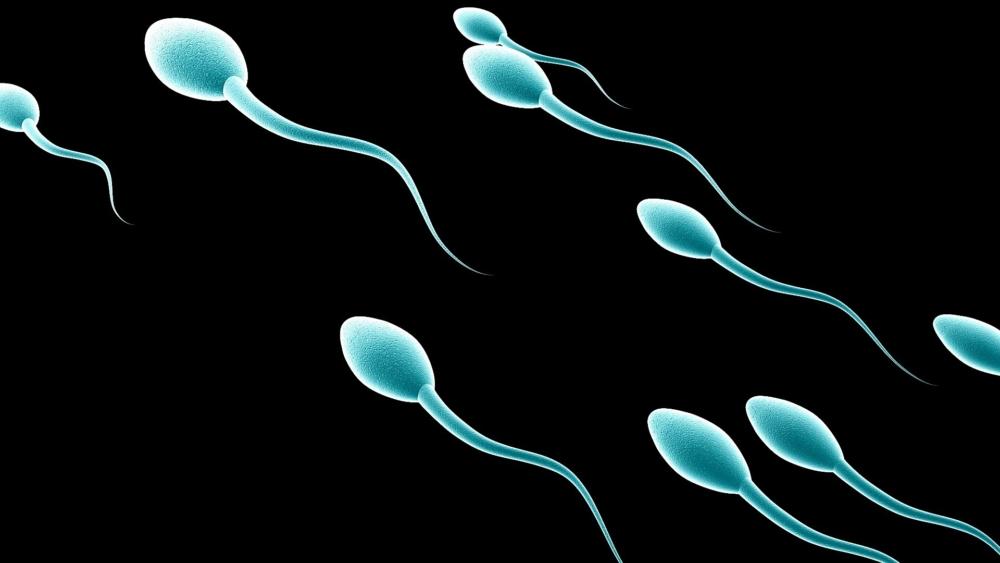 Химический Состав Спермы