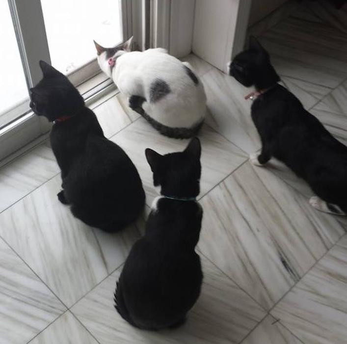 Шоковое состояние: коты, которых впервые выпустили на снег