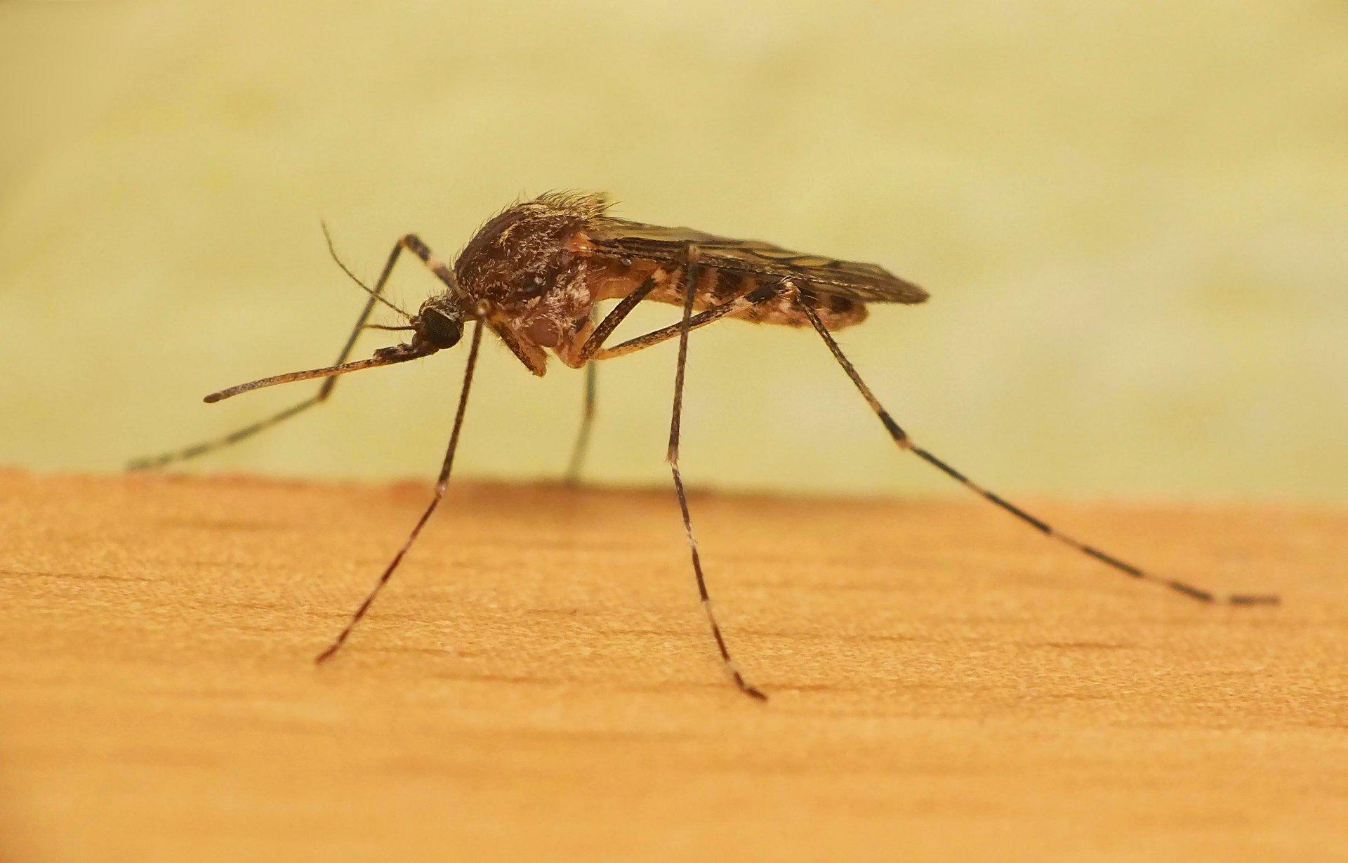 К чему снятся комары − сонник: комары