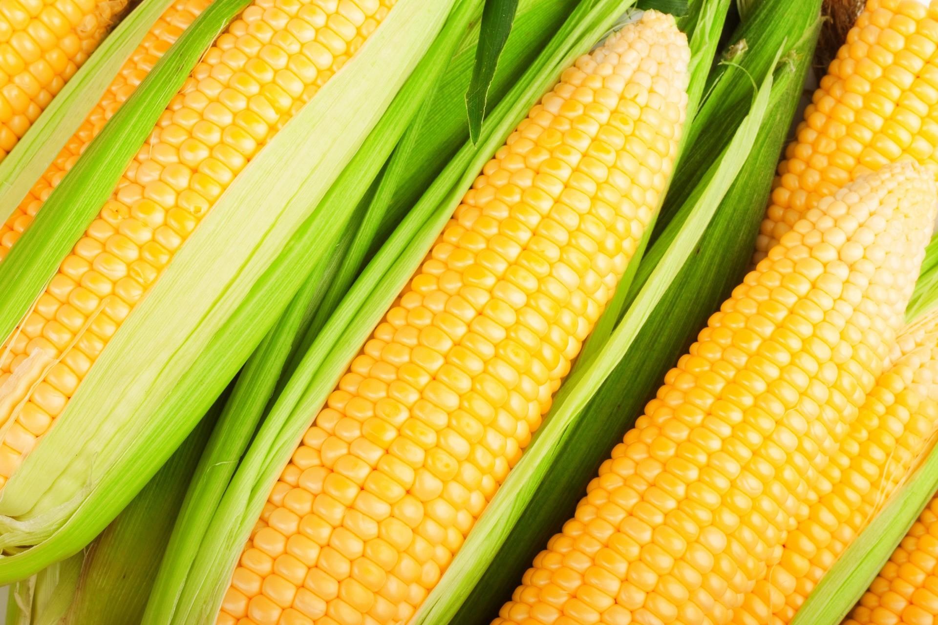 Сонник толкование снов к чему снится кукуруза