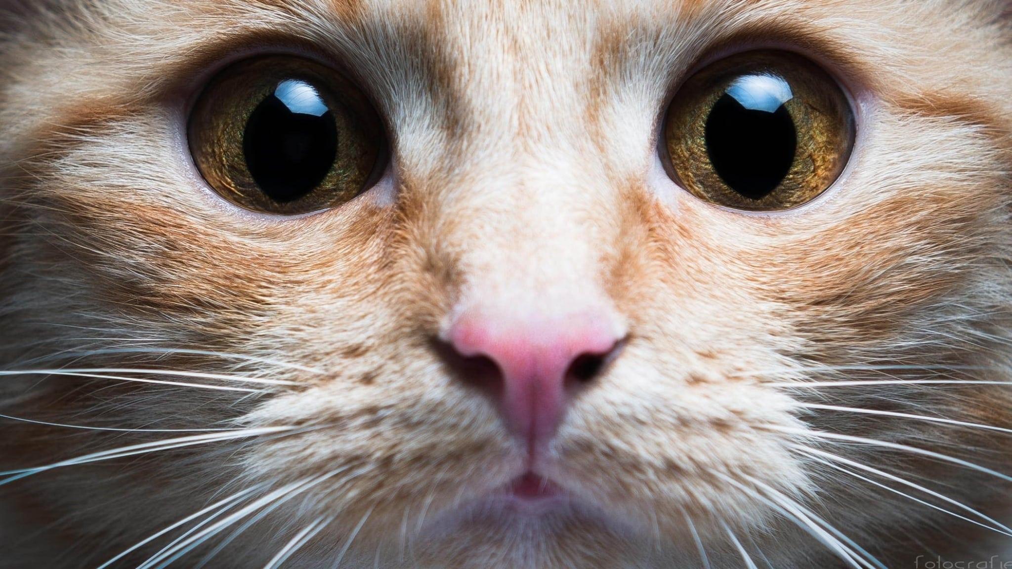 котята с карими глазами фото мессенджер