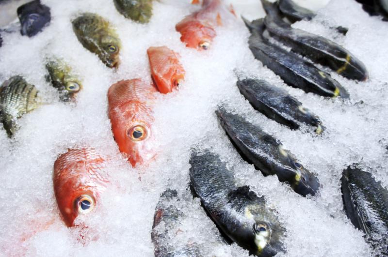 сонник рыба мороженая видеть