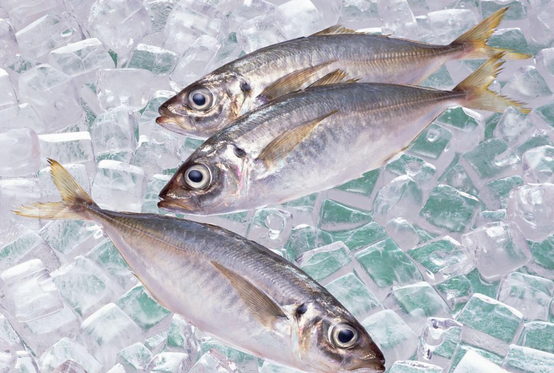 К чему снится замороженная рыба женщине
