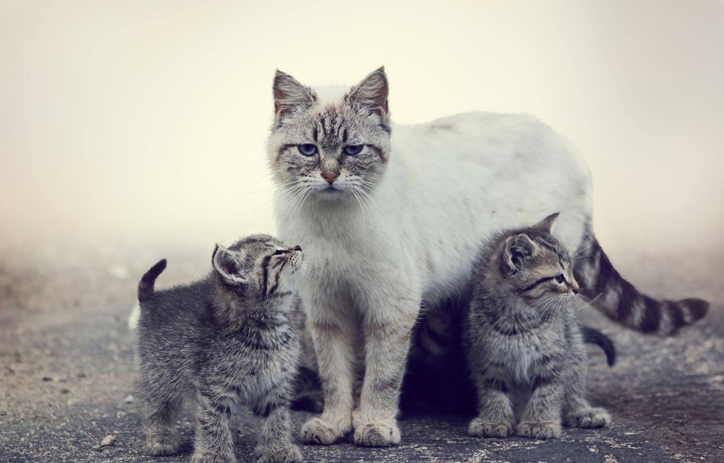 К чему снится кошка с котятами — сонник: кошка с котятами ...