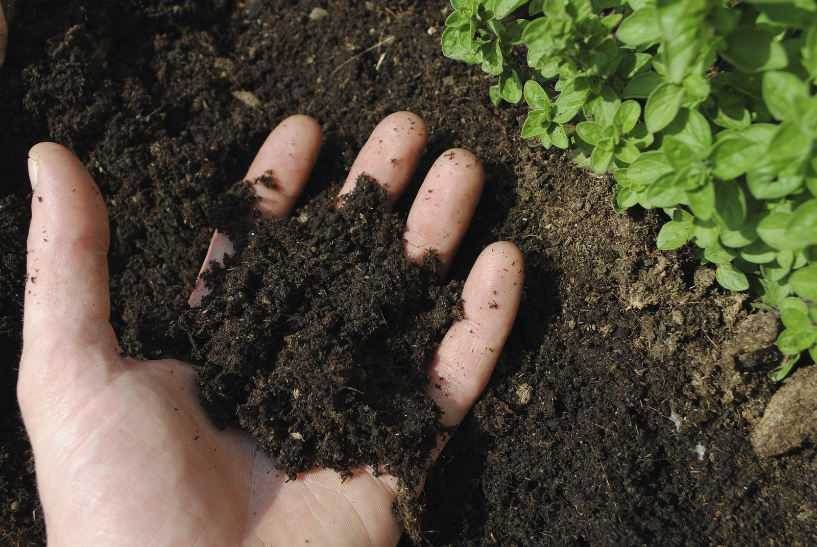 улучшение структуры почвы