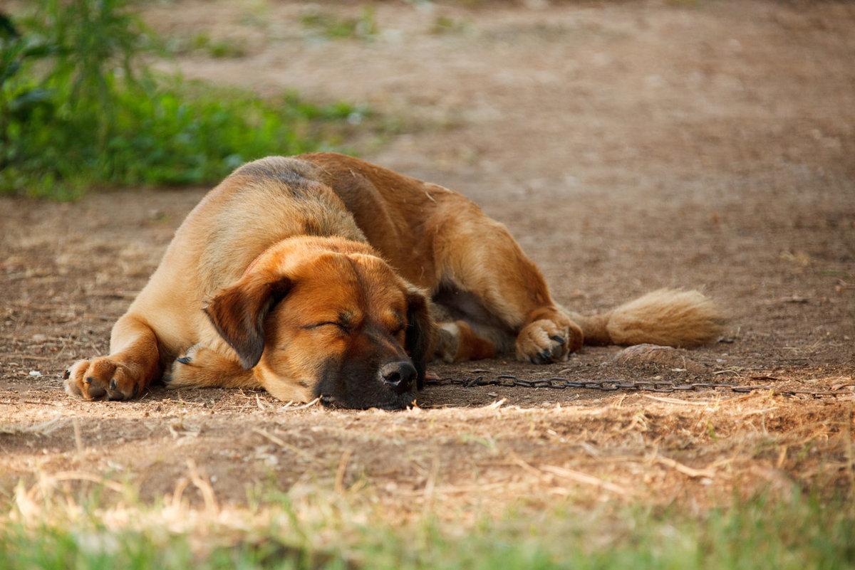 К чему снится мертвая собака - расскажут сонники