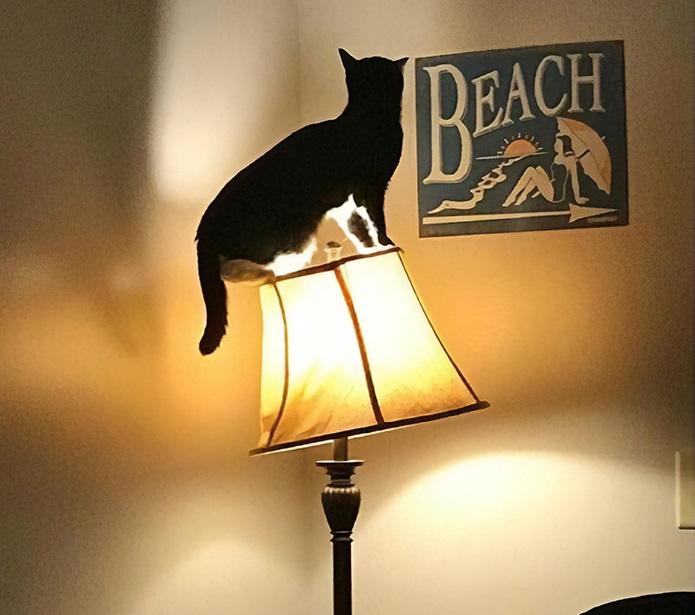 Коты-воришки, которых поймали на месте преступления