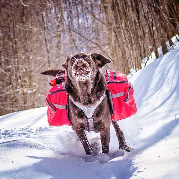 В поход с собакой: фото, после которых вам захочется взять на свой отдых домашнего любимца