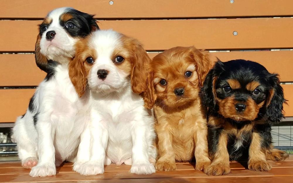 счет собаки маленьких пород и картинка и название митчелл зайдите узнайте