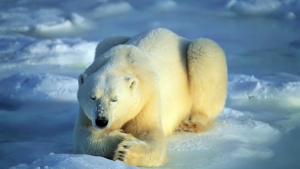 Сонник толкование снов к чему снится медведь