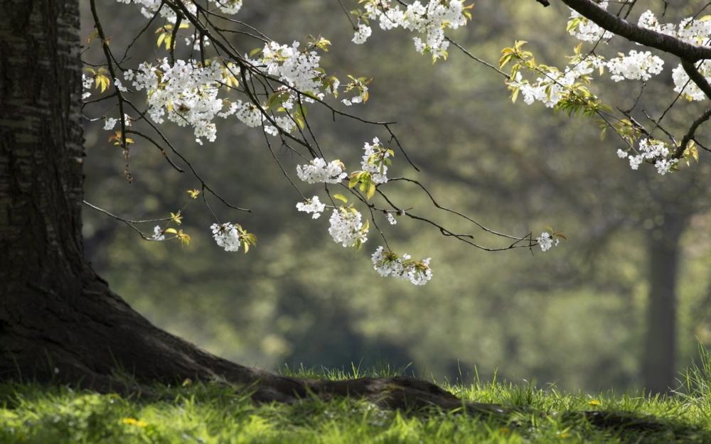 Пословицы о весне: народные приметы по месяцам, наблюдения за природой в краткой поэтической форме