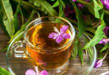 иван чай при беременности