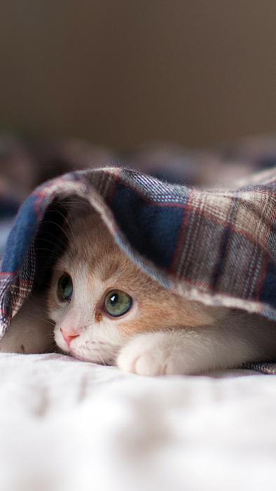 пневмония у котят