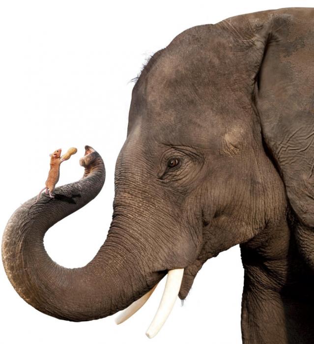 почему слоны боятся мышей